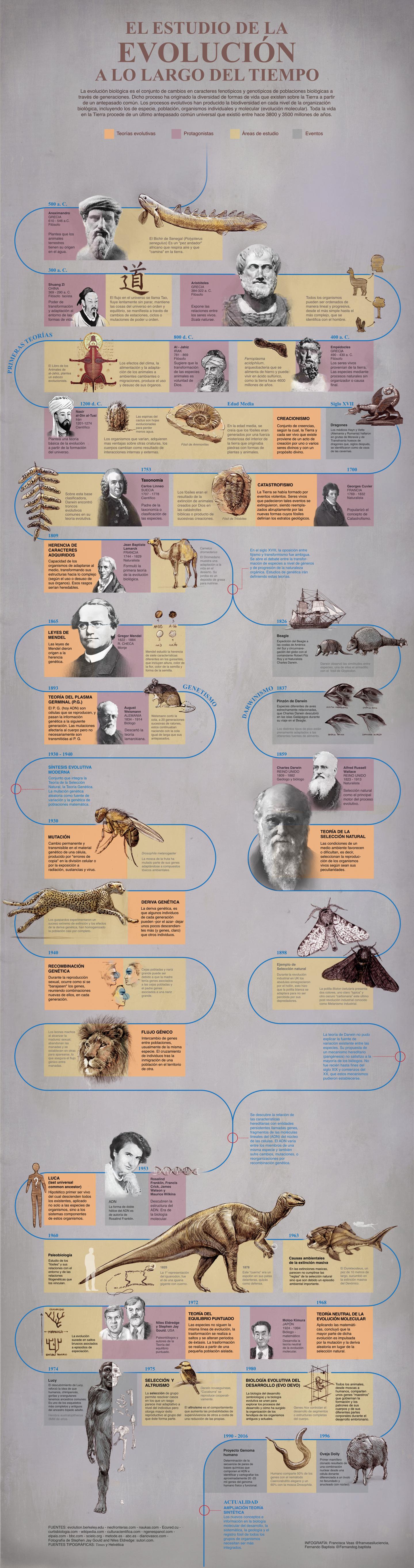 Infografía de la evolución biológica. Francisca Veas y Fernando Baptista