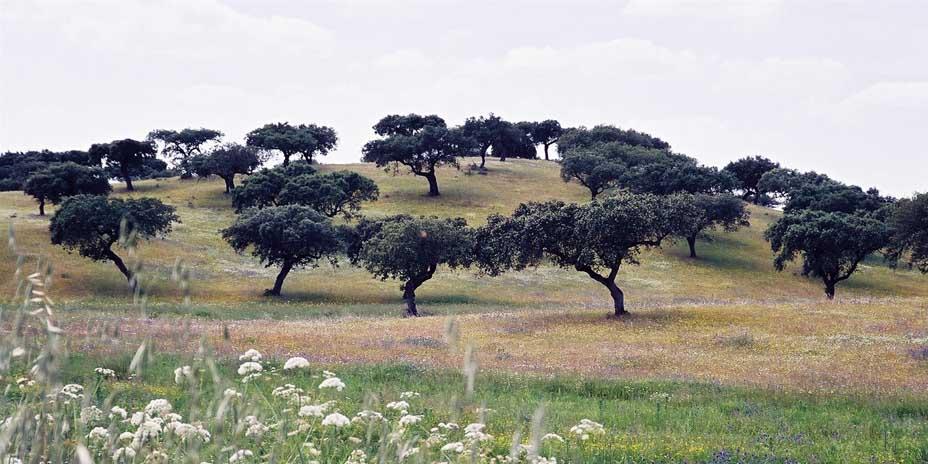 Typische Landschaft des Alentejo bei Monsaraz