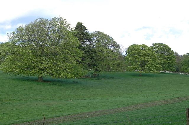 Near Balcarres - geograph.org.uk - 426216.jpg English: Near Balcarres Mature trees and a section of the disused drive into Balcarres House. Date 7 May