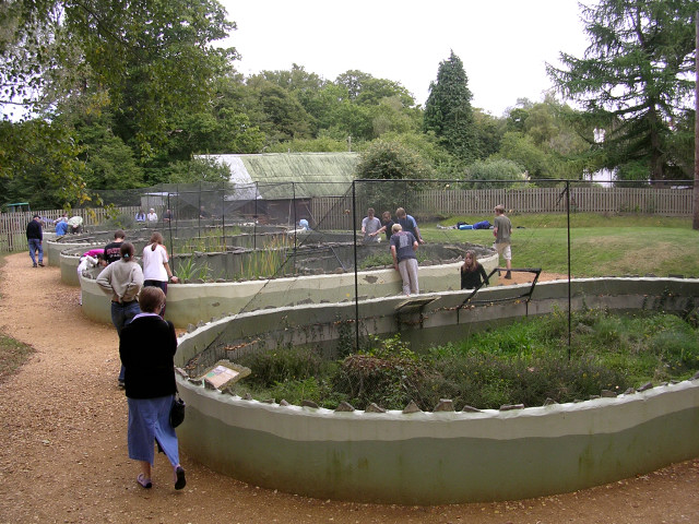 New Forest Reptile Centre, Holidays Hill, New Forest - geograph.org.uk - 57409