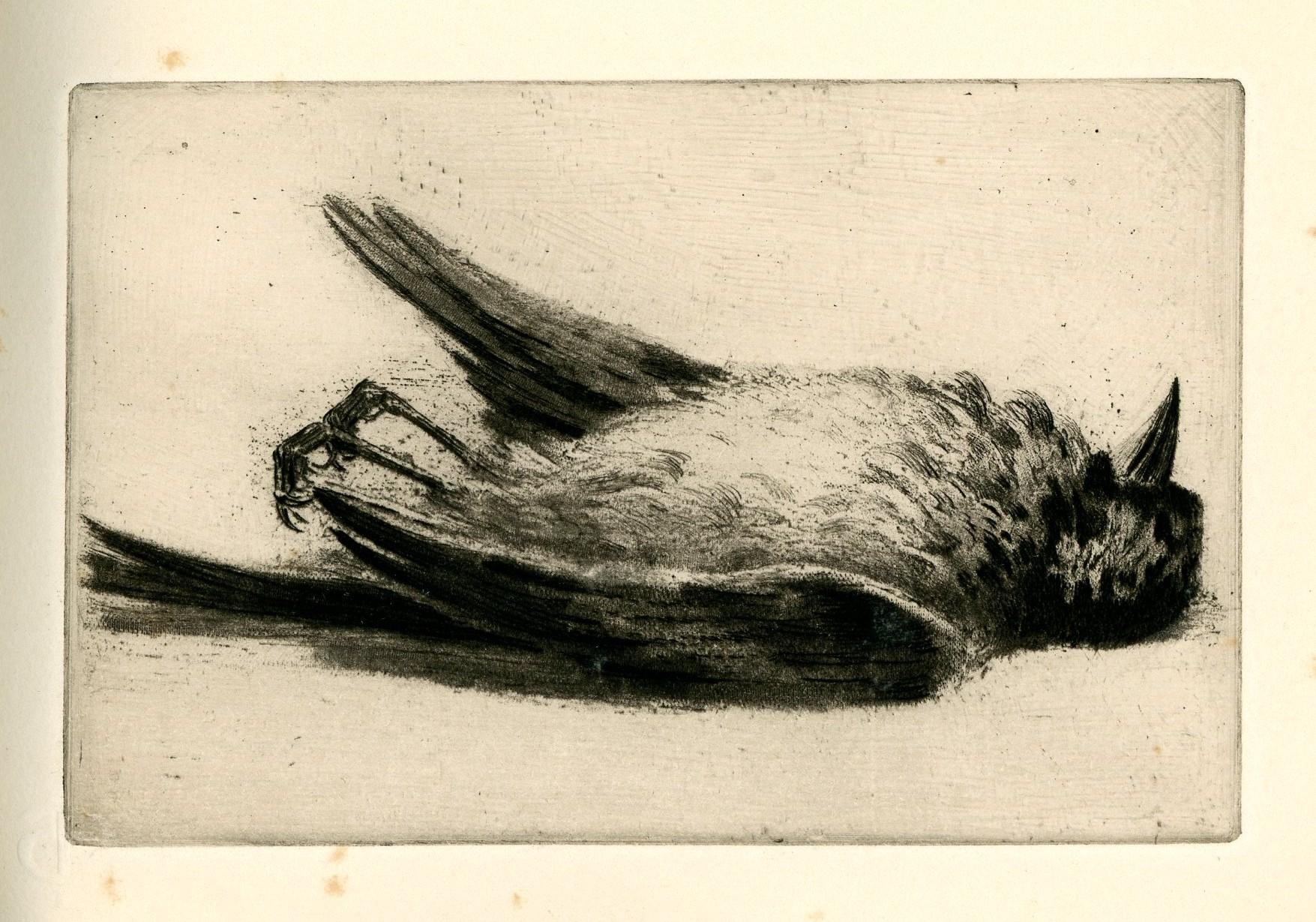 """Résultat de recherche d'images pour """"oiseau mort"""""""