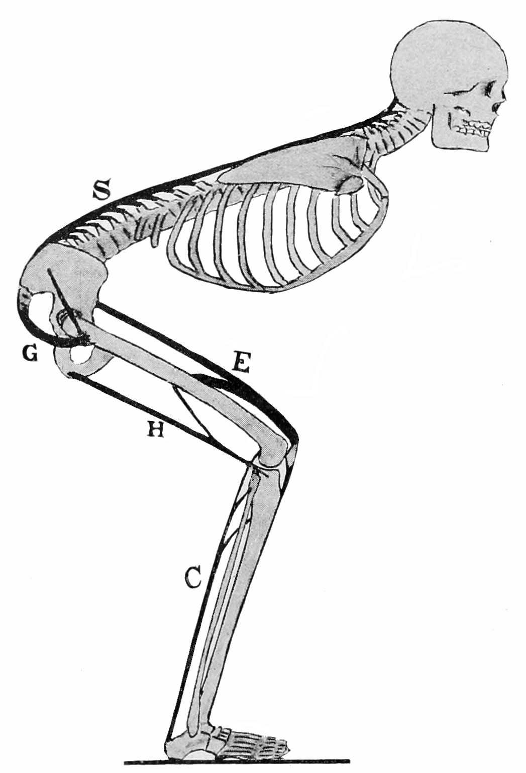 PSM V48 D196 Speed skating position of the body.jpg