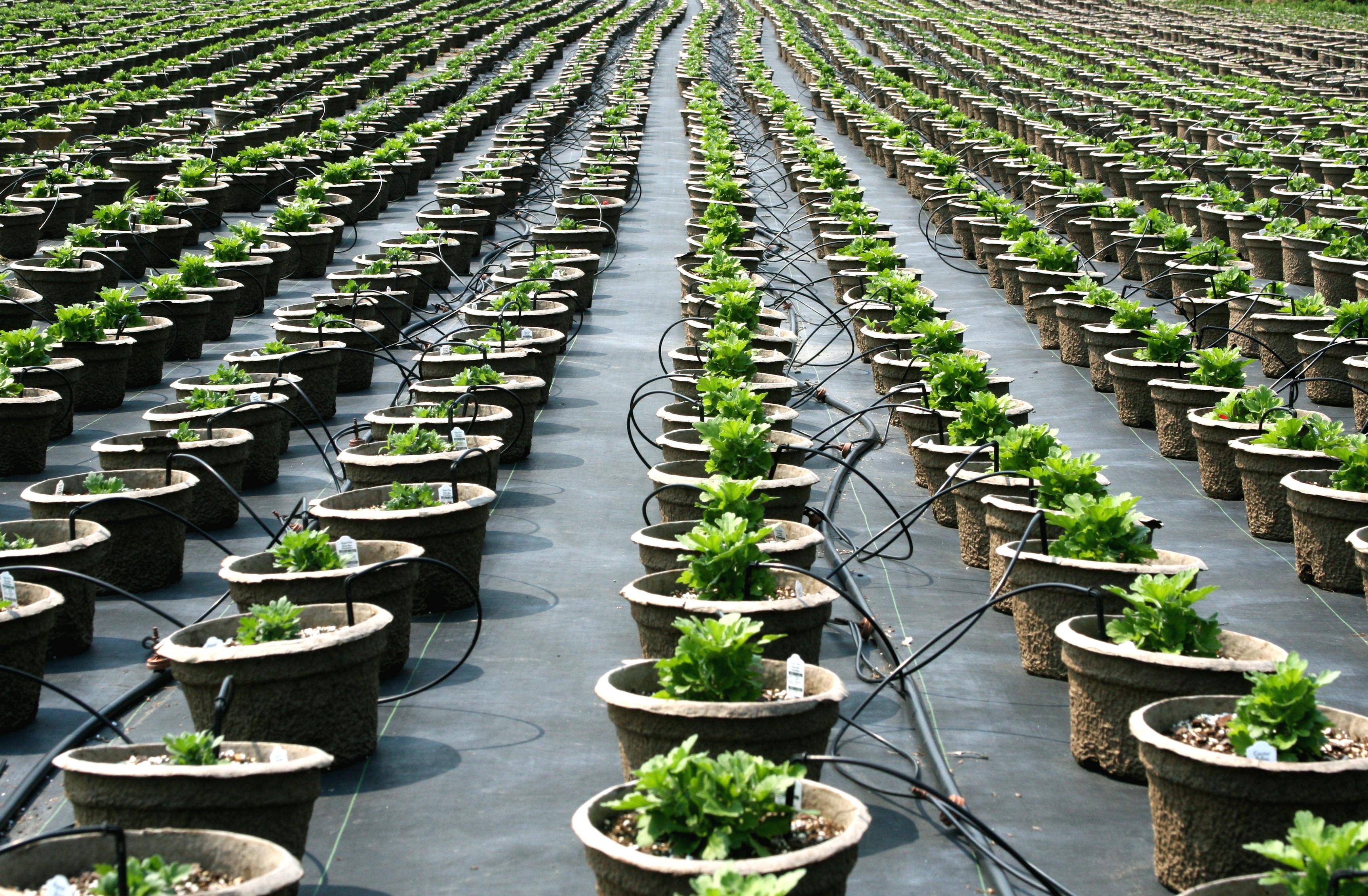 Description plant nursery pot rows