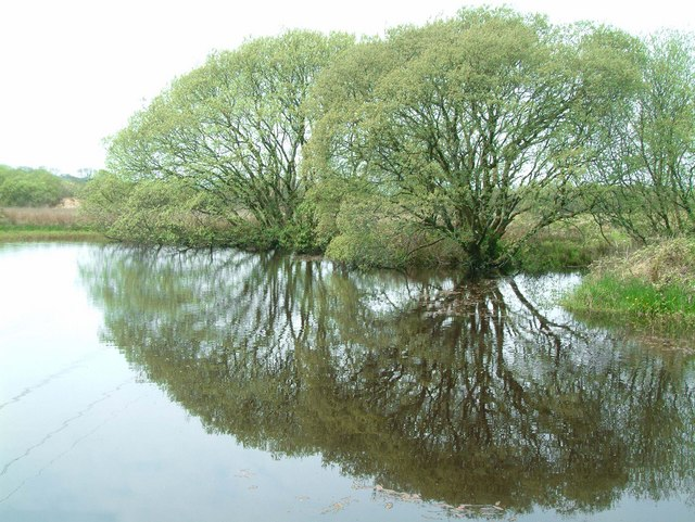 Reflection in pond - geograph.org.uk - 169880