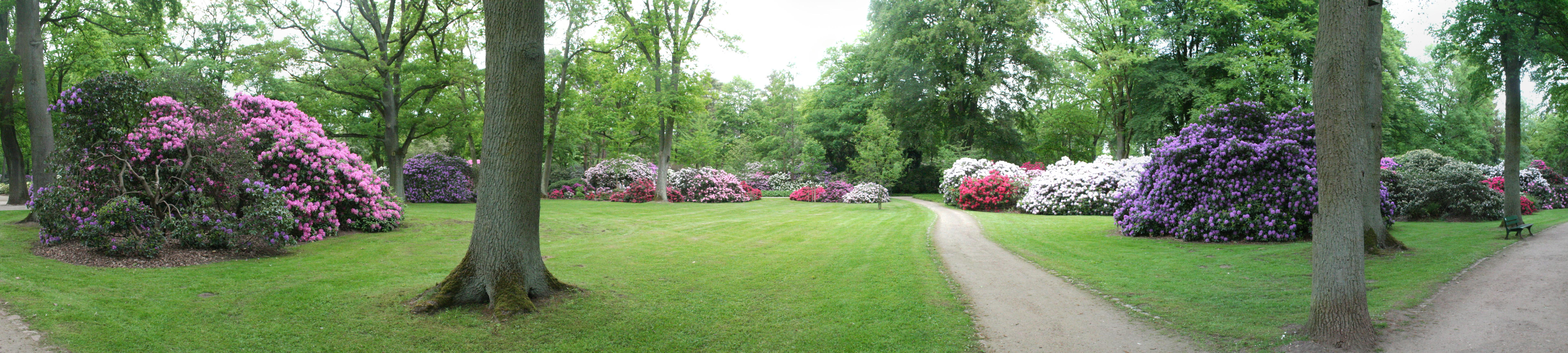 datei rhododendronpark bremen 14 05 09 wikipedia. Black Bedroom Furniture Sets. Home Design Ideas