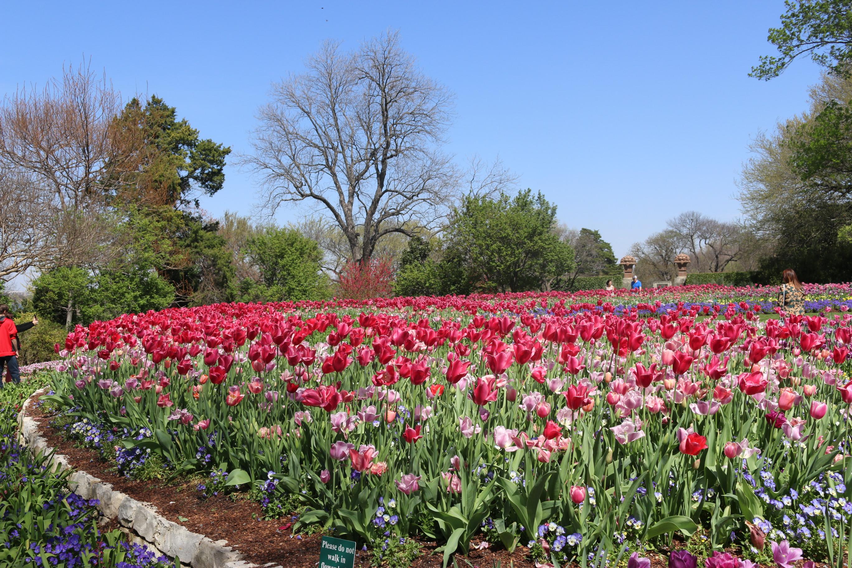 File:The Dallas Arboretum And Botanical Garden