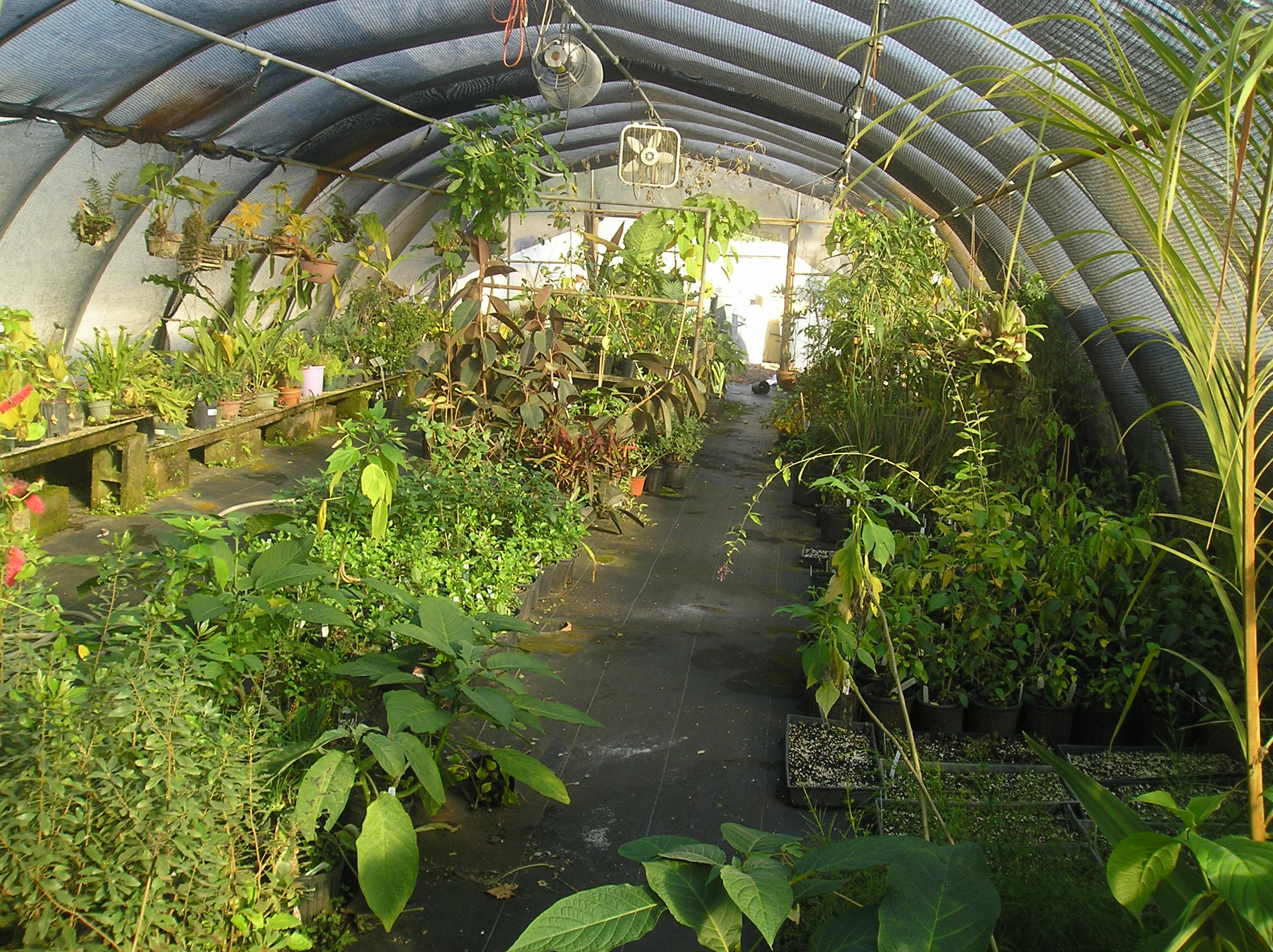 Uc botanical garden hours tami jim s magical uc berkeley for Botanical gardens hours today