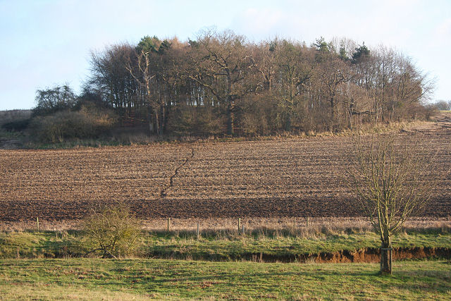 Woodland clump in Ickworth Park - geograph.org.uk - 1094638