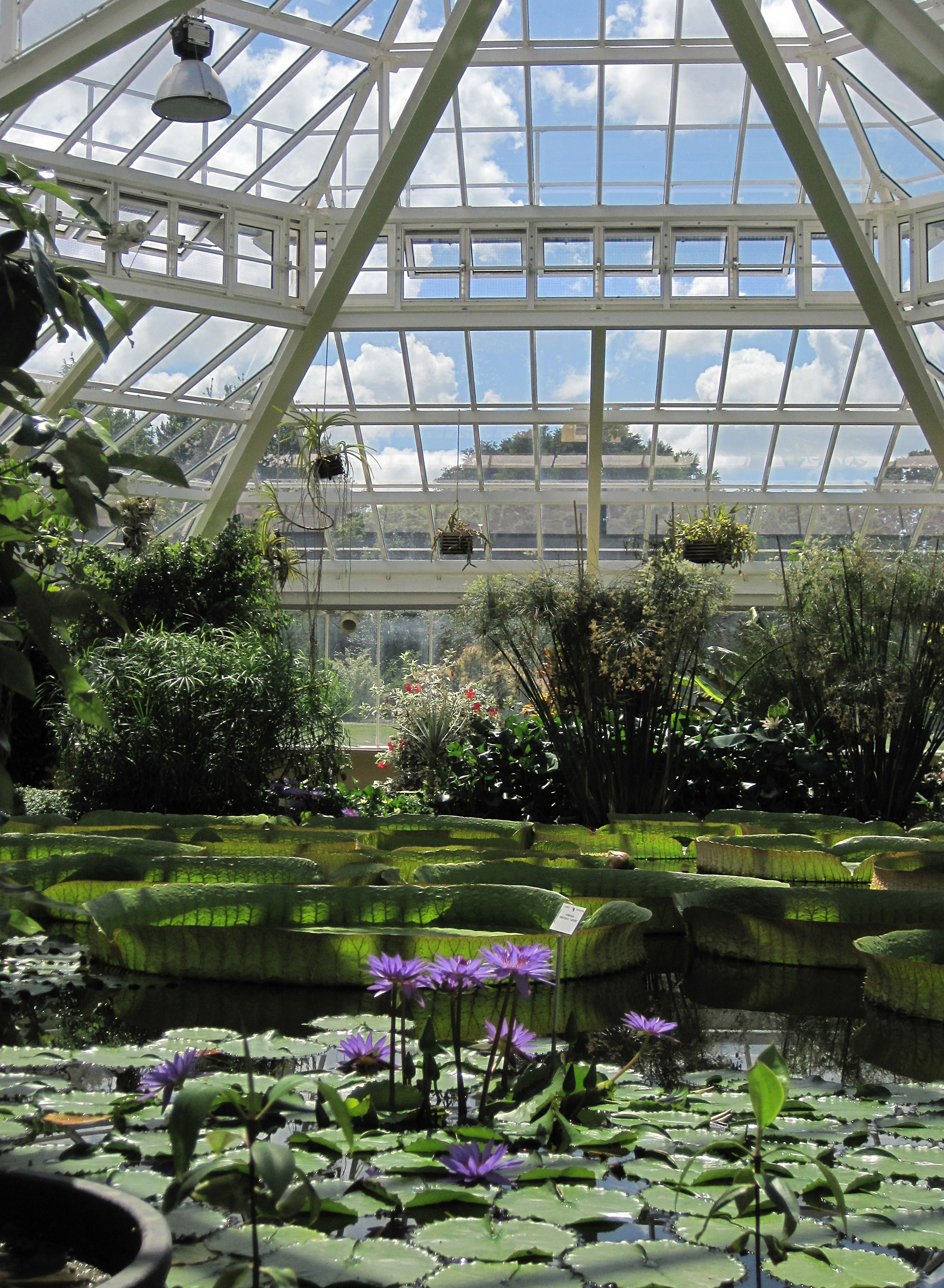 File 0 meise serre victoria 1 jpg wikimedia commons for Serre de jardin belgique