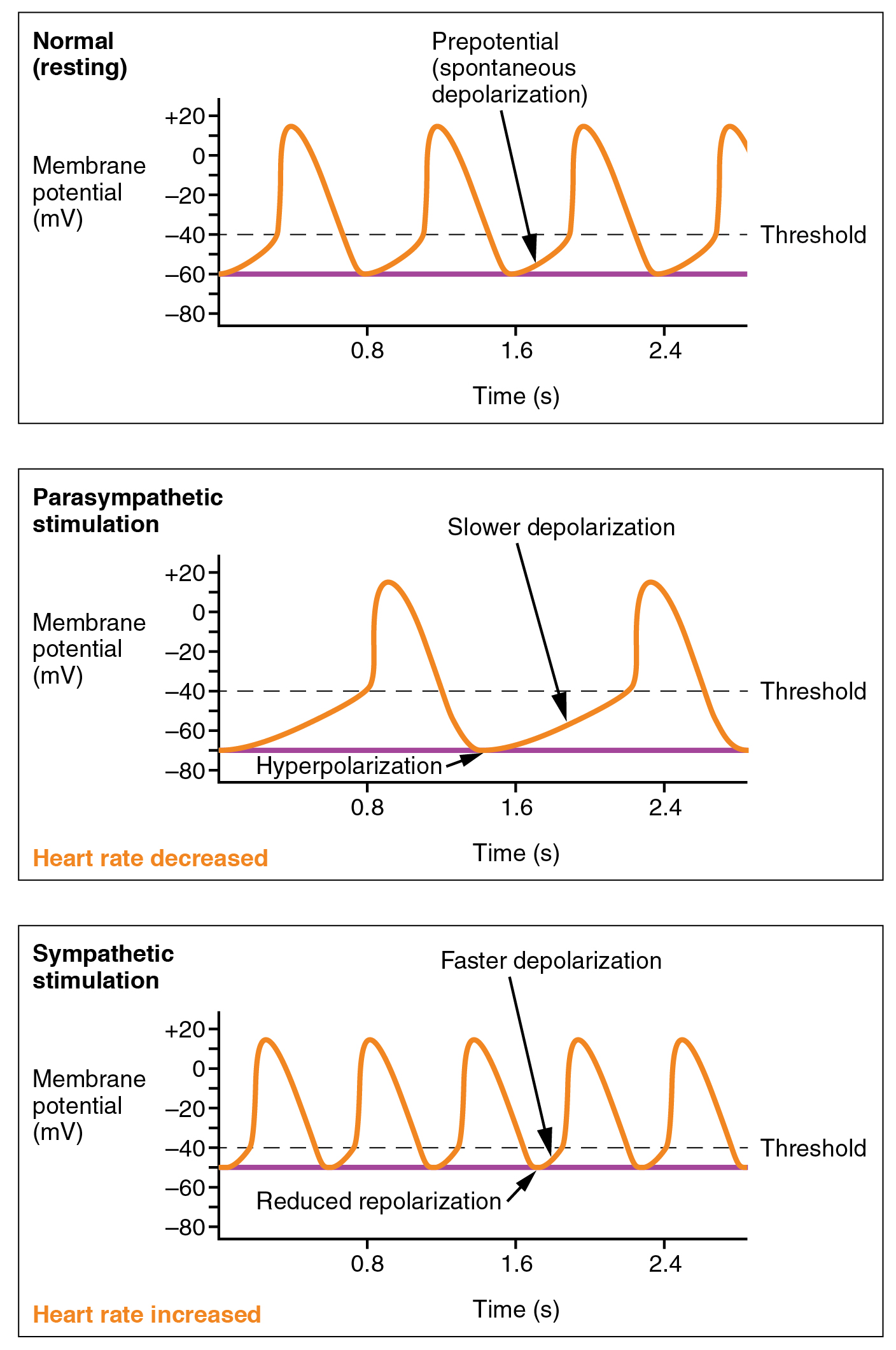 what is the relationship between resting potential and action