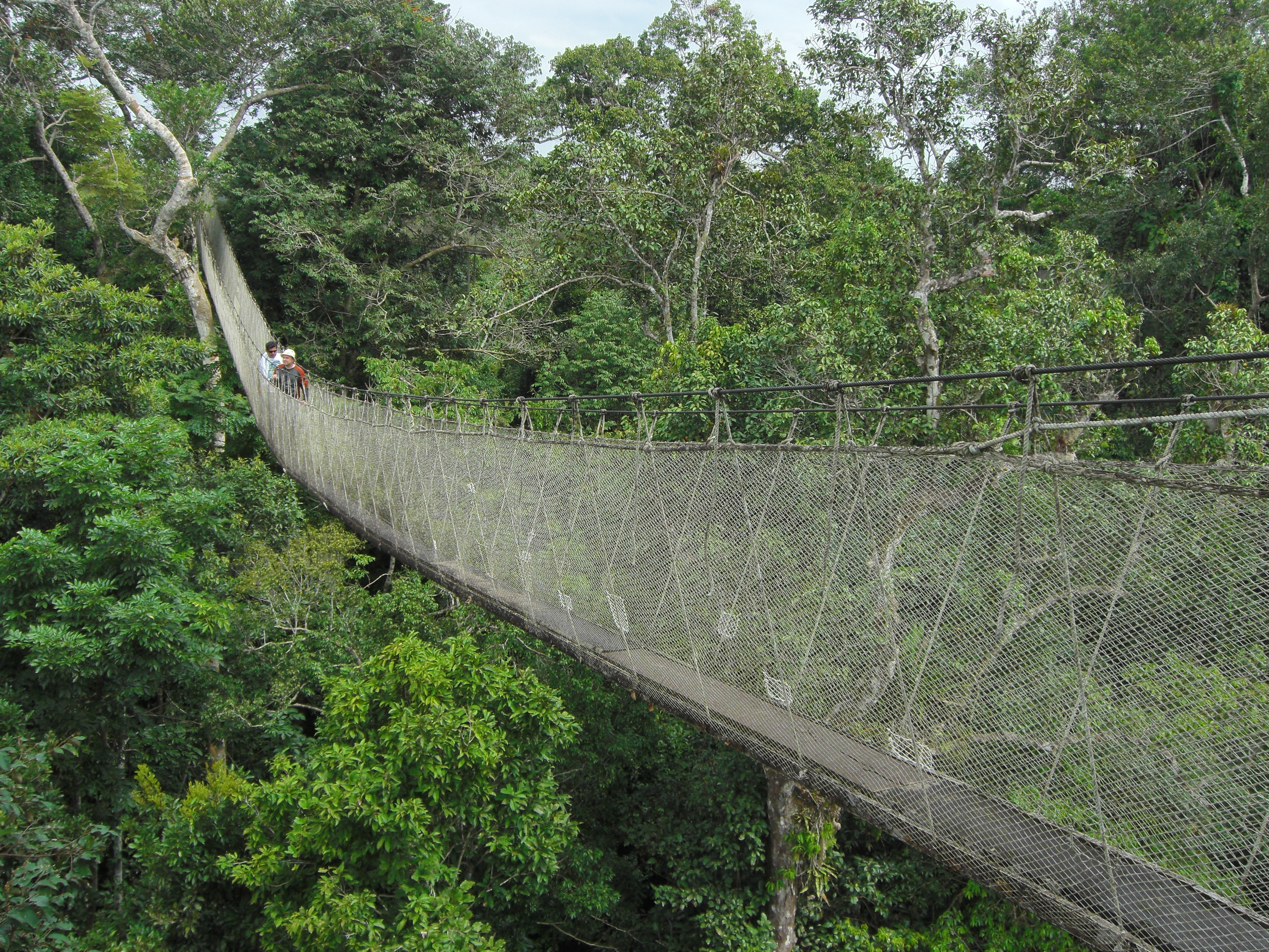 fileacts canopy walkway flickr pellaea 2jpg - Open Canopy 2016