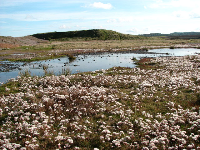 A shallow lagoon - geograph.org.uk - 1011030