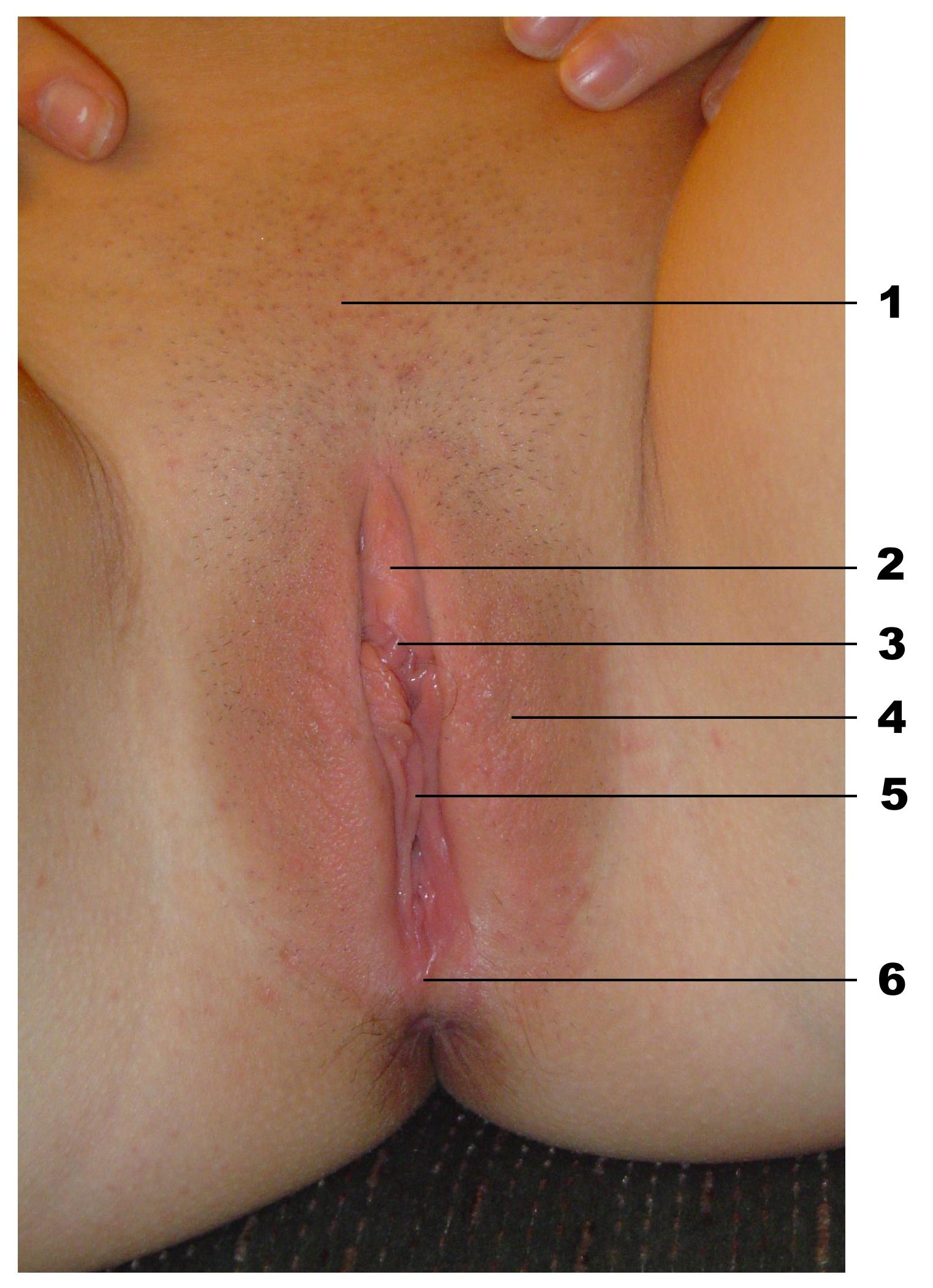 Risposte di imunofan a psoriasi