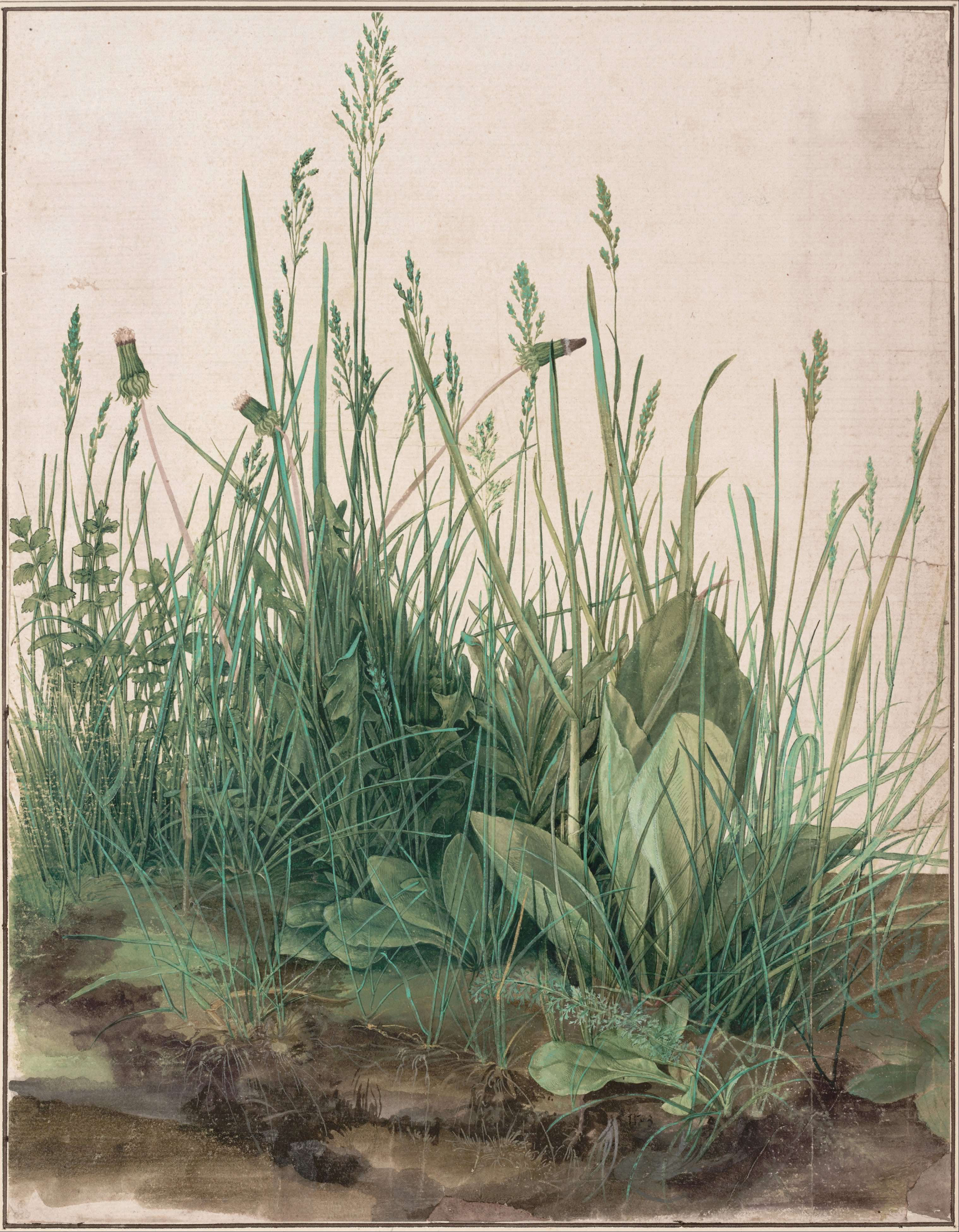 http://upload.wikimedia.org/wikipedia/commons/f/f6/Albrecht_D%C3%BCrer_-_The_Large_Piece_of_Turf%2C_1503_-_Google_Art_Project.jpg
