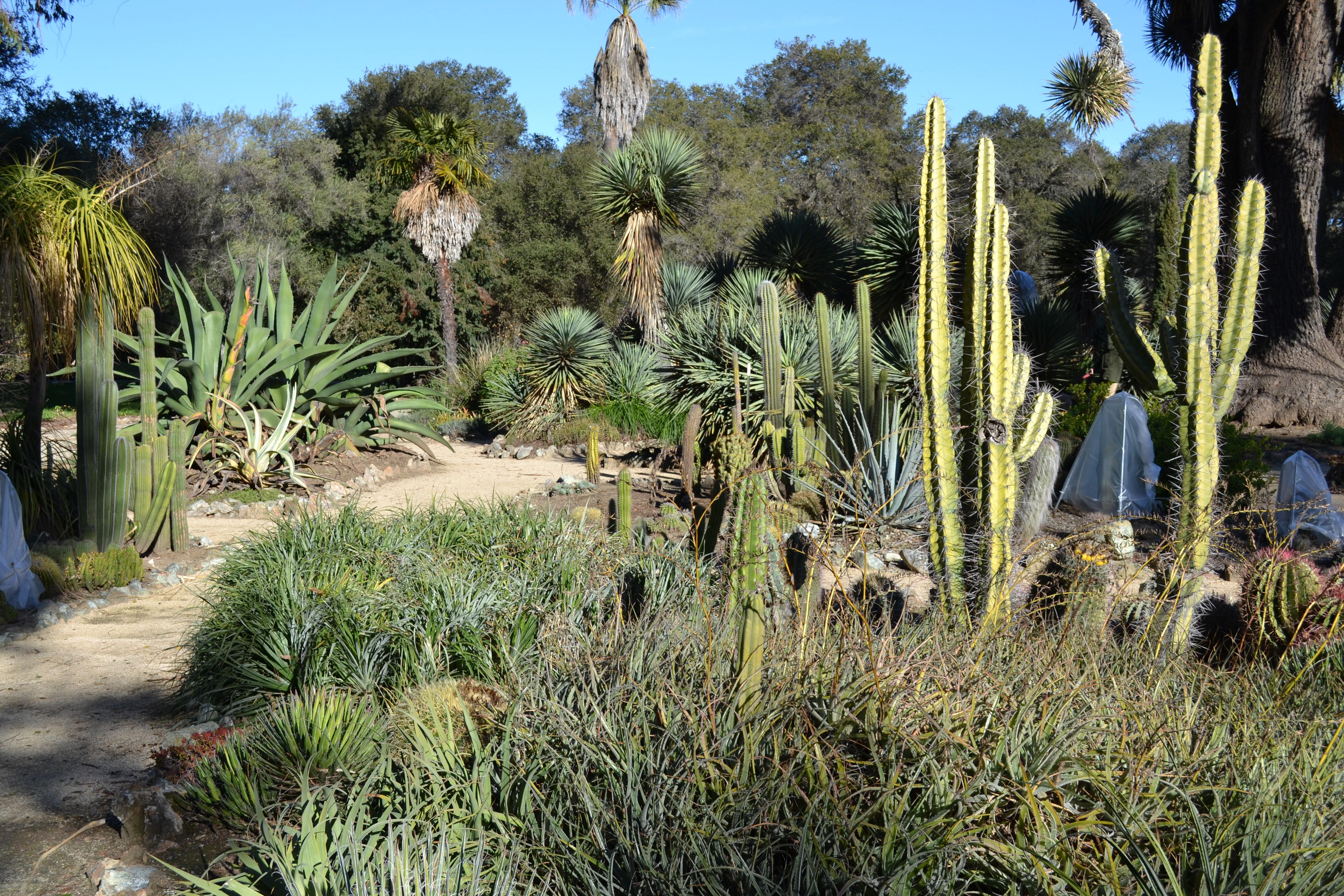 Exceptionnel File:Arizona Cactus Garden At Stanford University 6.JPG