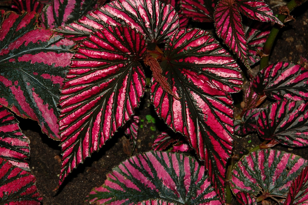 Image Gallery Indoor Plants Colorful Foliage