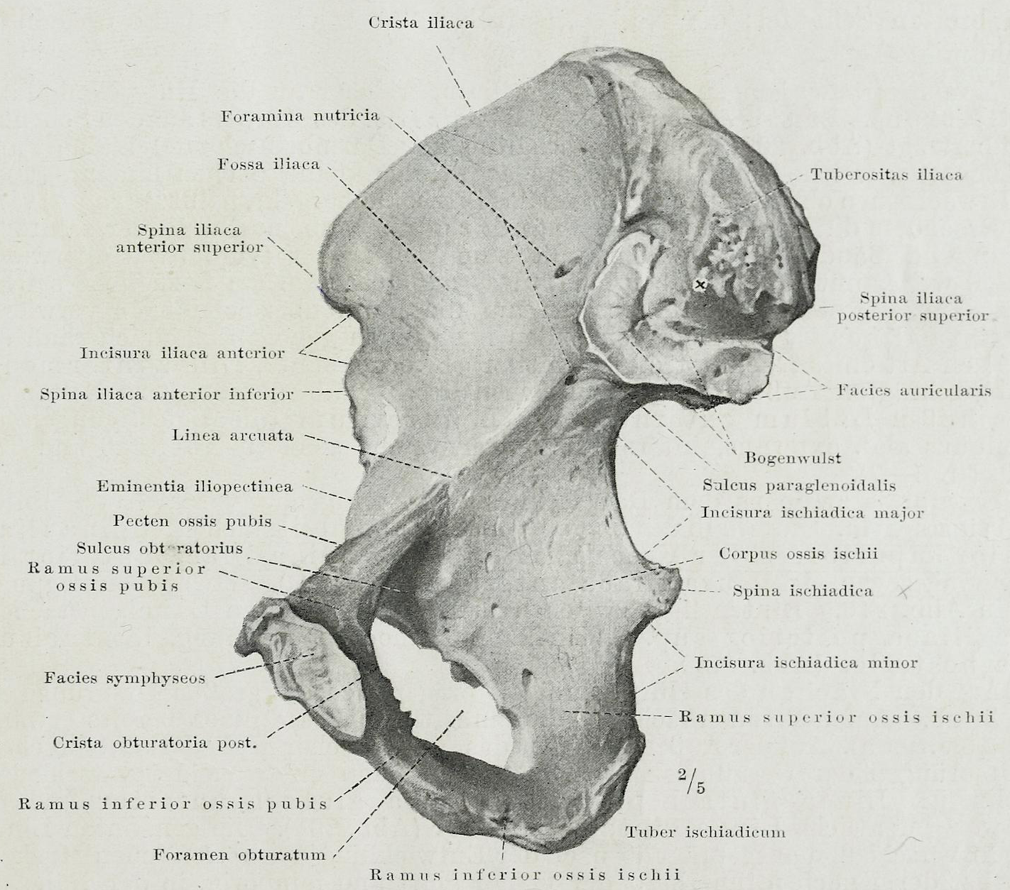 File:Braus 1921 228.png - Wikimedia Commons