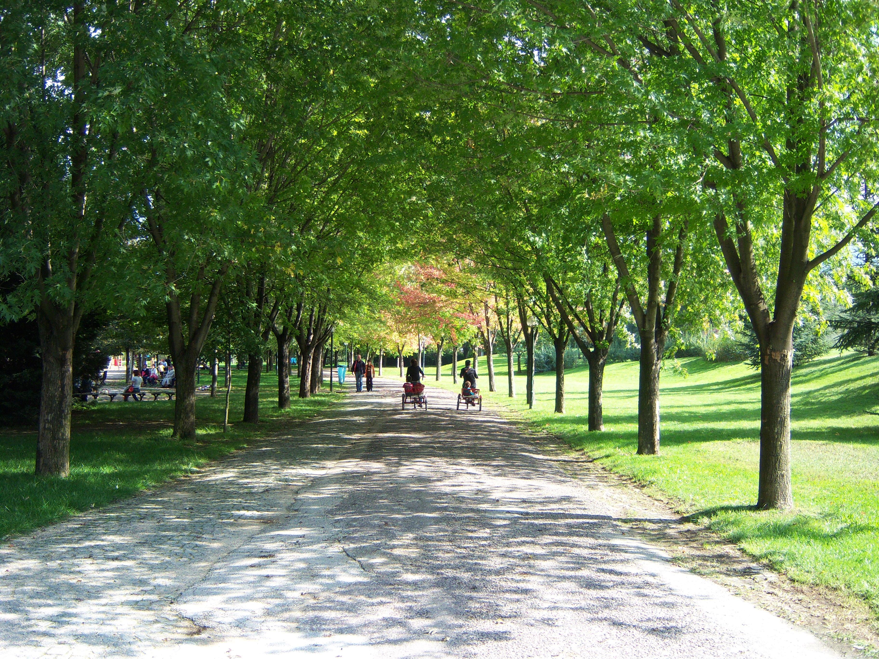 Botanik  Dosya:Bursa Botanik Parkı1.JPG - Vikipedi