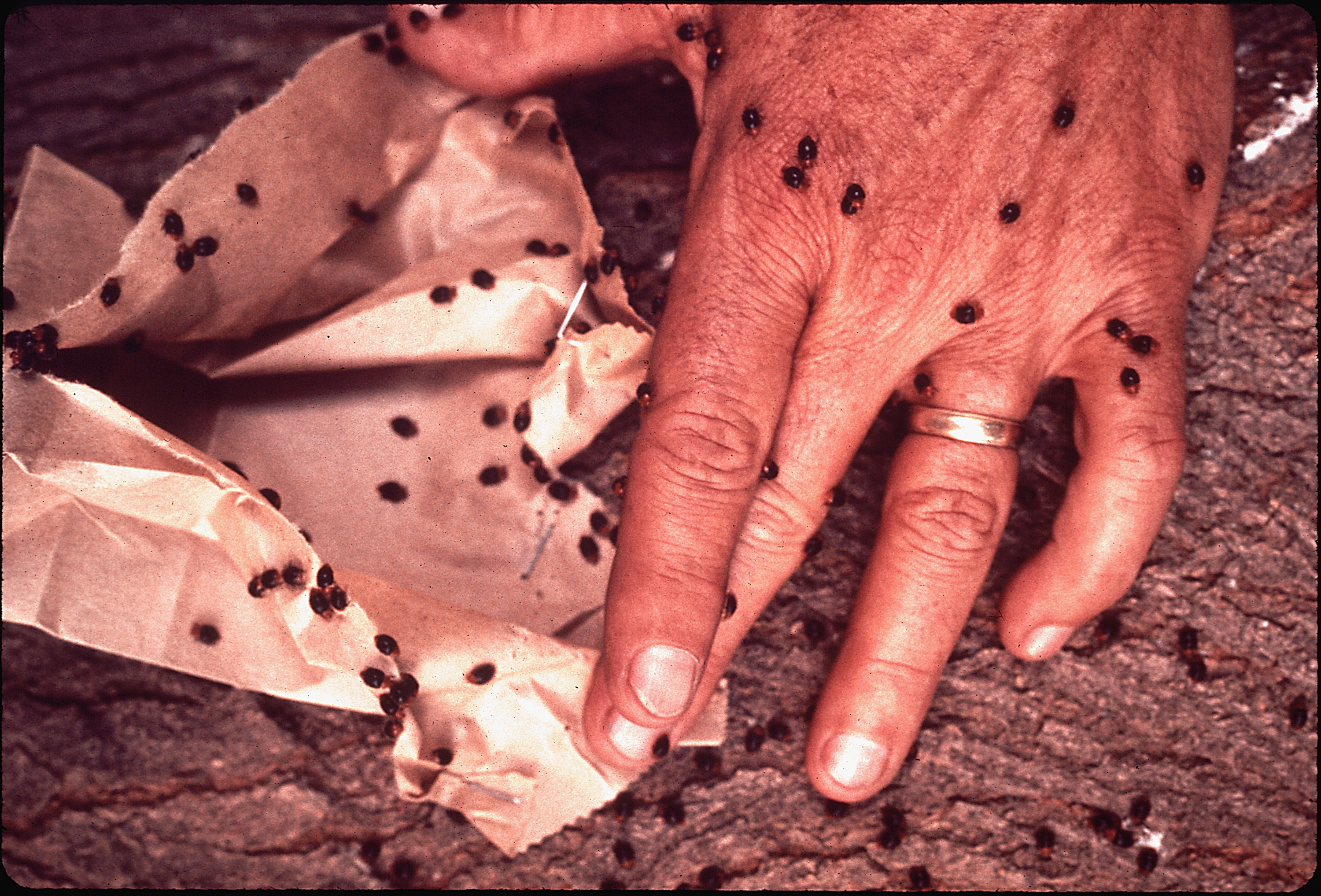 Trypophilia And Trypophobia A Picture Thread Not Exactly Nsfw