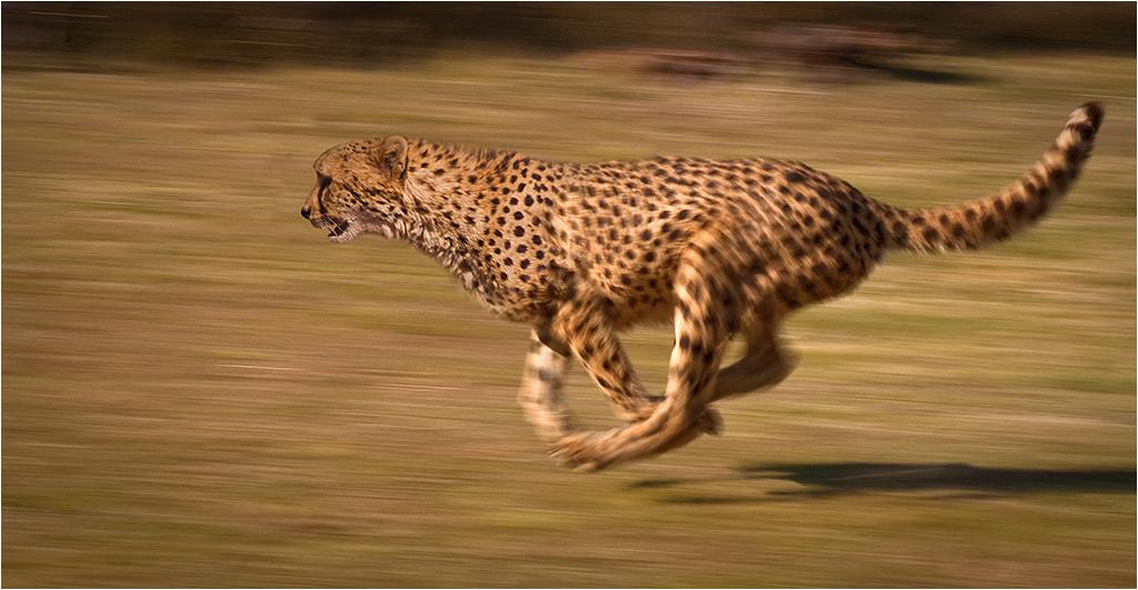 Animal locomotion - Wi...