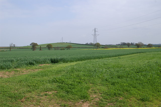 Crops - geograph.org.uk - 160009
