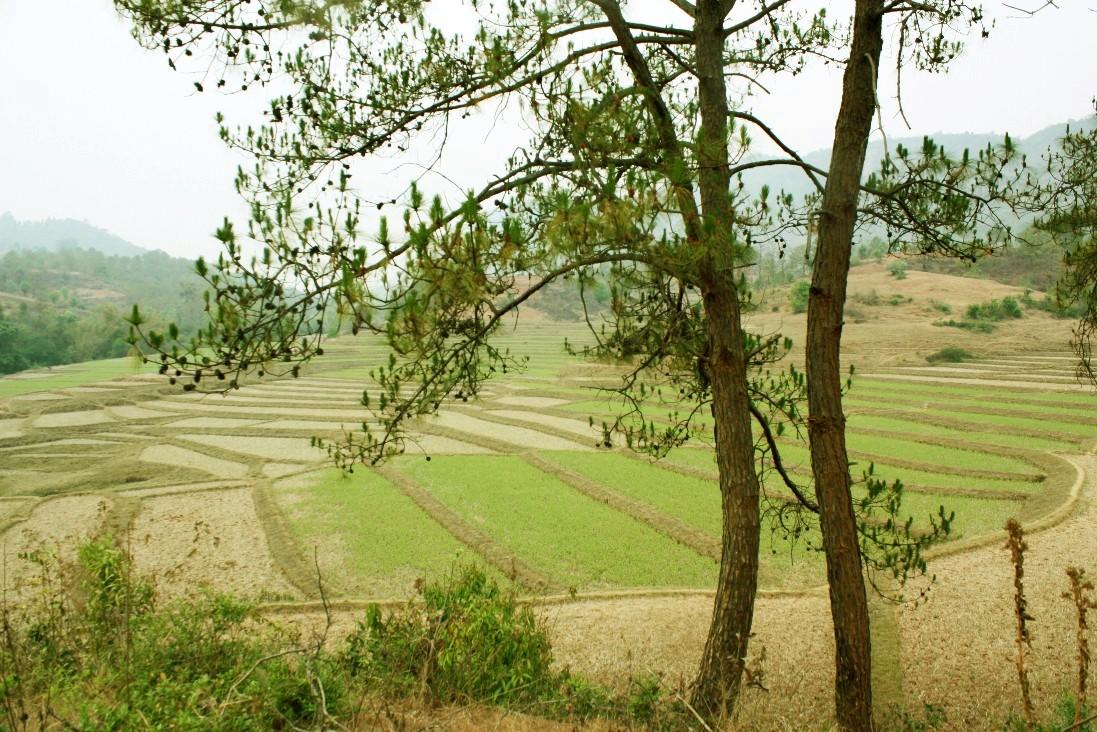 Image result for myanmar land