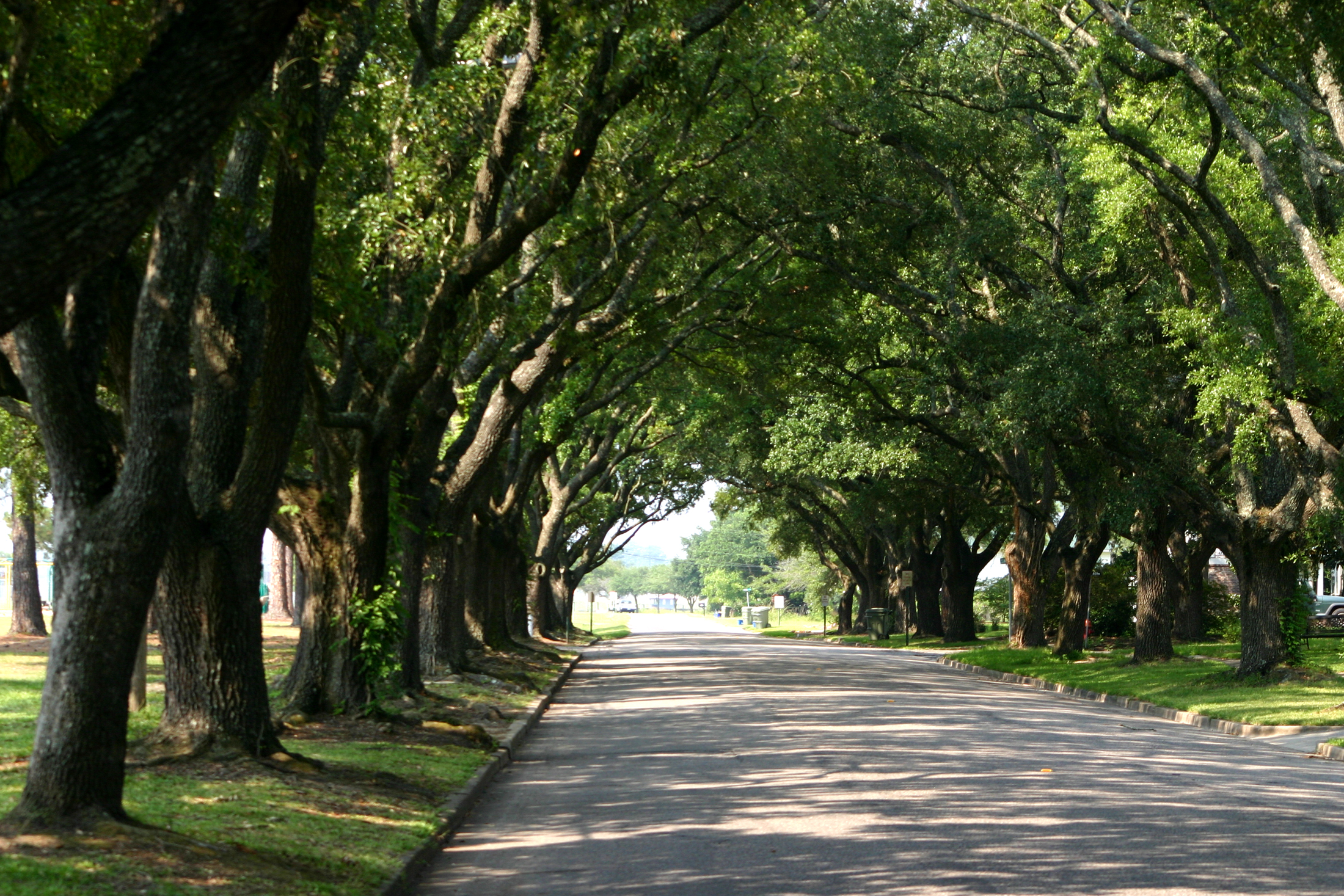 Coastal towns and cities often have hurricane-resistant Live oaks overarching the streets in historic neighborhoods, such as these on East Bay Street, Georgetown.