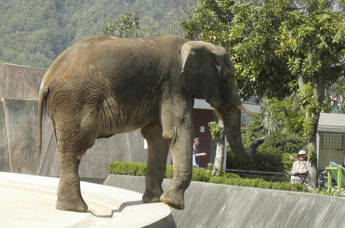 File:Hiroshima City Asa Zoological Park 2.jpg - Wikimedia Commons