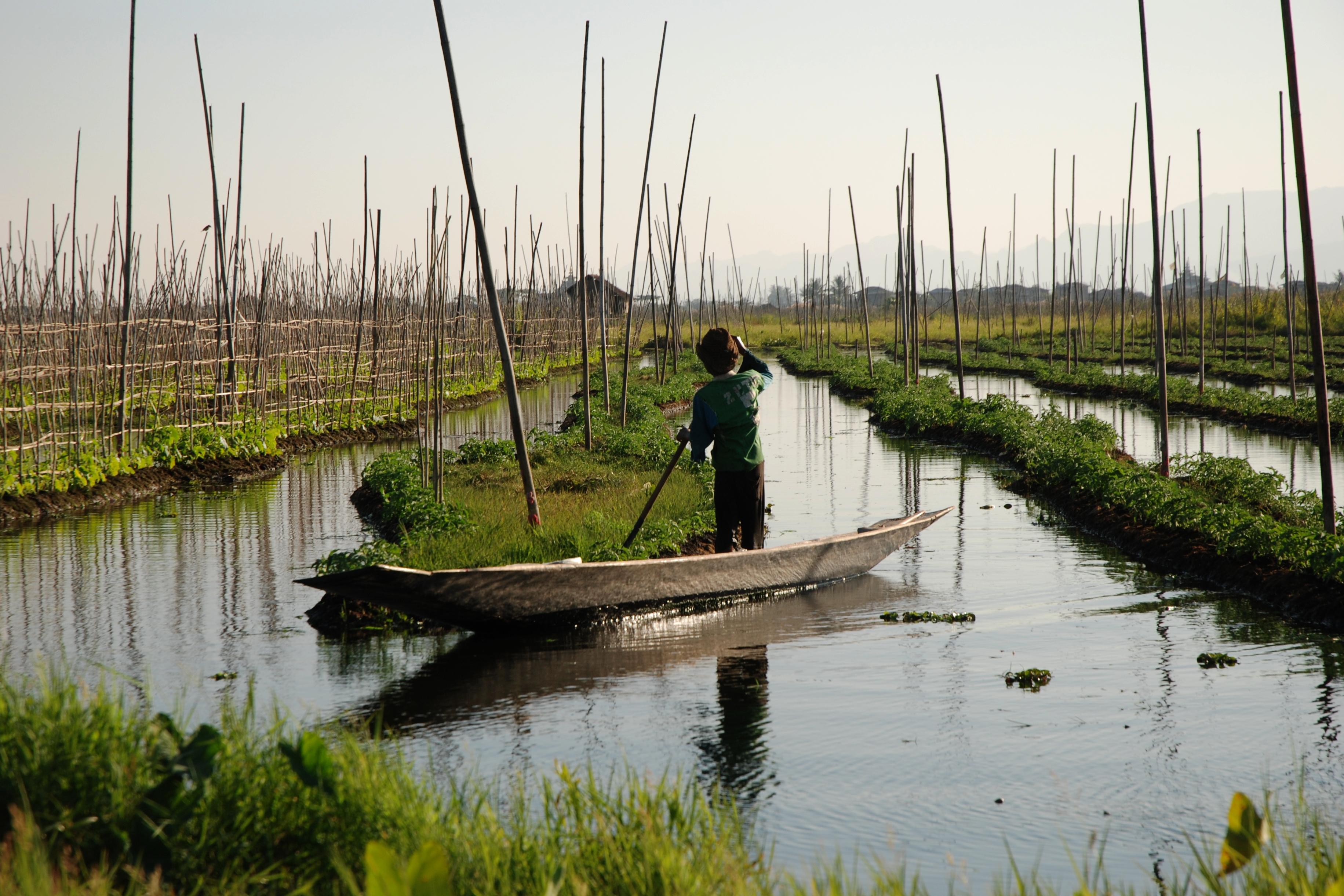 File Inle Lake Burma Floating Gardens 4 Jpg Wikimedia Commons