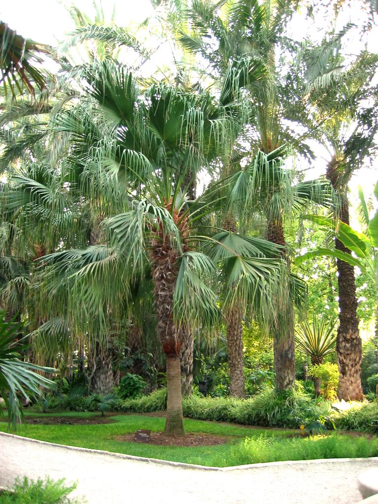 The Palms Of Lake Jackson Apartment Homes
