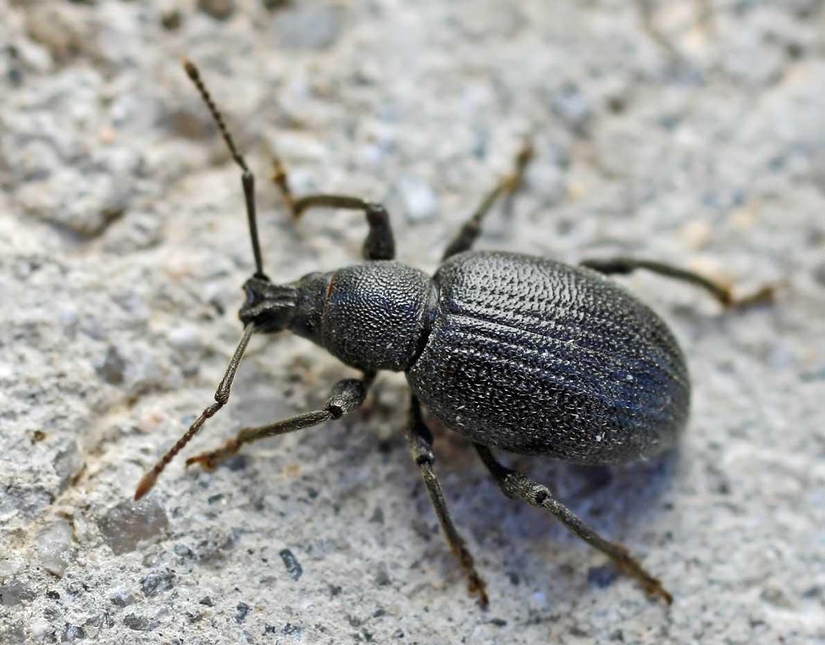Arizona Bed Bug Companies