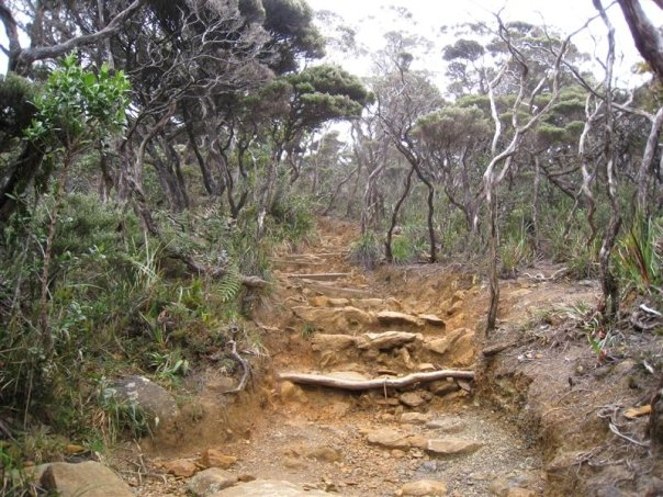 File:Path of Mount Kinabalu.jpg