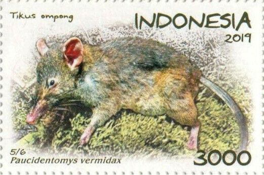 Shrew-ratt, on Indonesian stamp