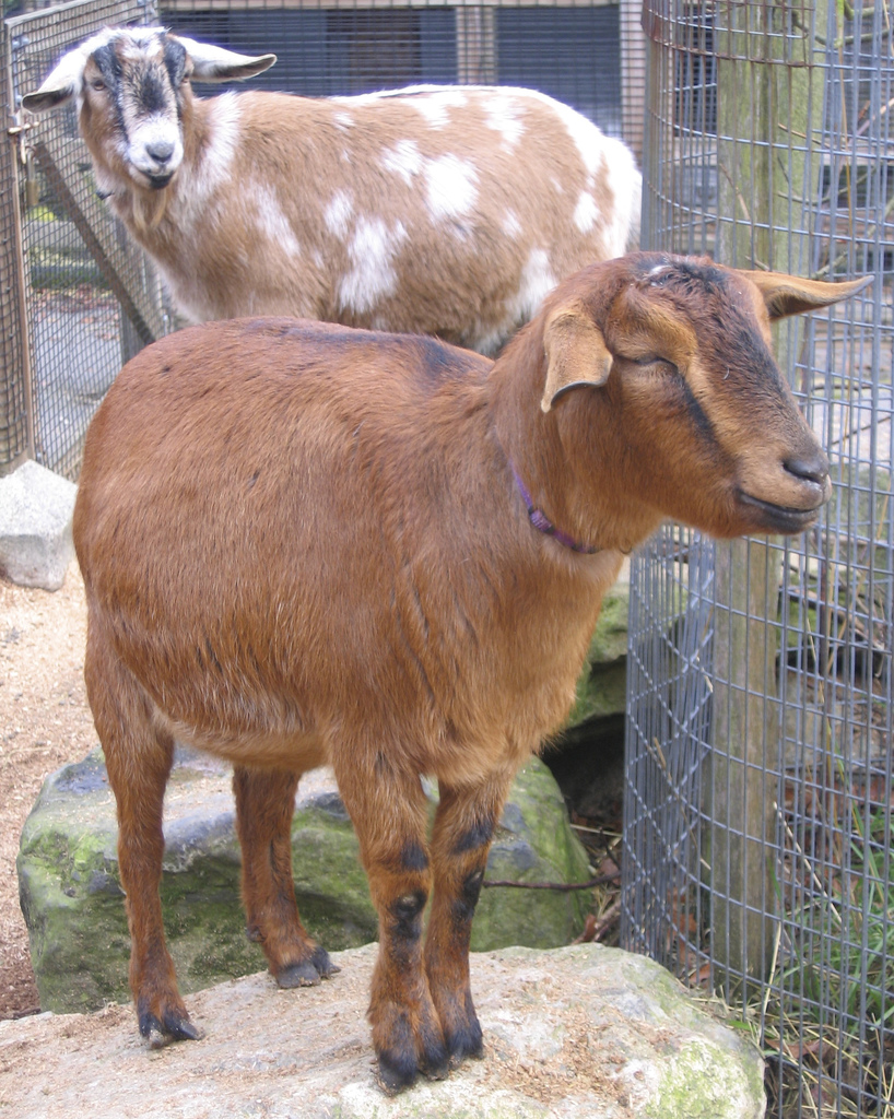A Goat S Journey Over Life S: AND NOW FOR SOMETHING COMPLETELY DIFFERENT: ANIMAL GROUPS