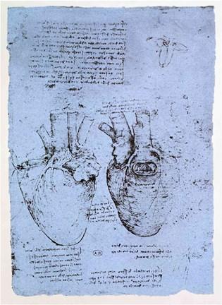 Filethe Heart Da Vincig Wikimedia Commons