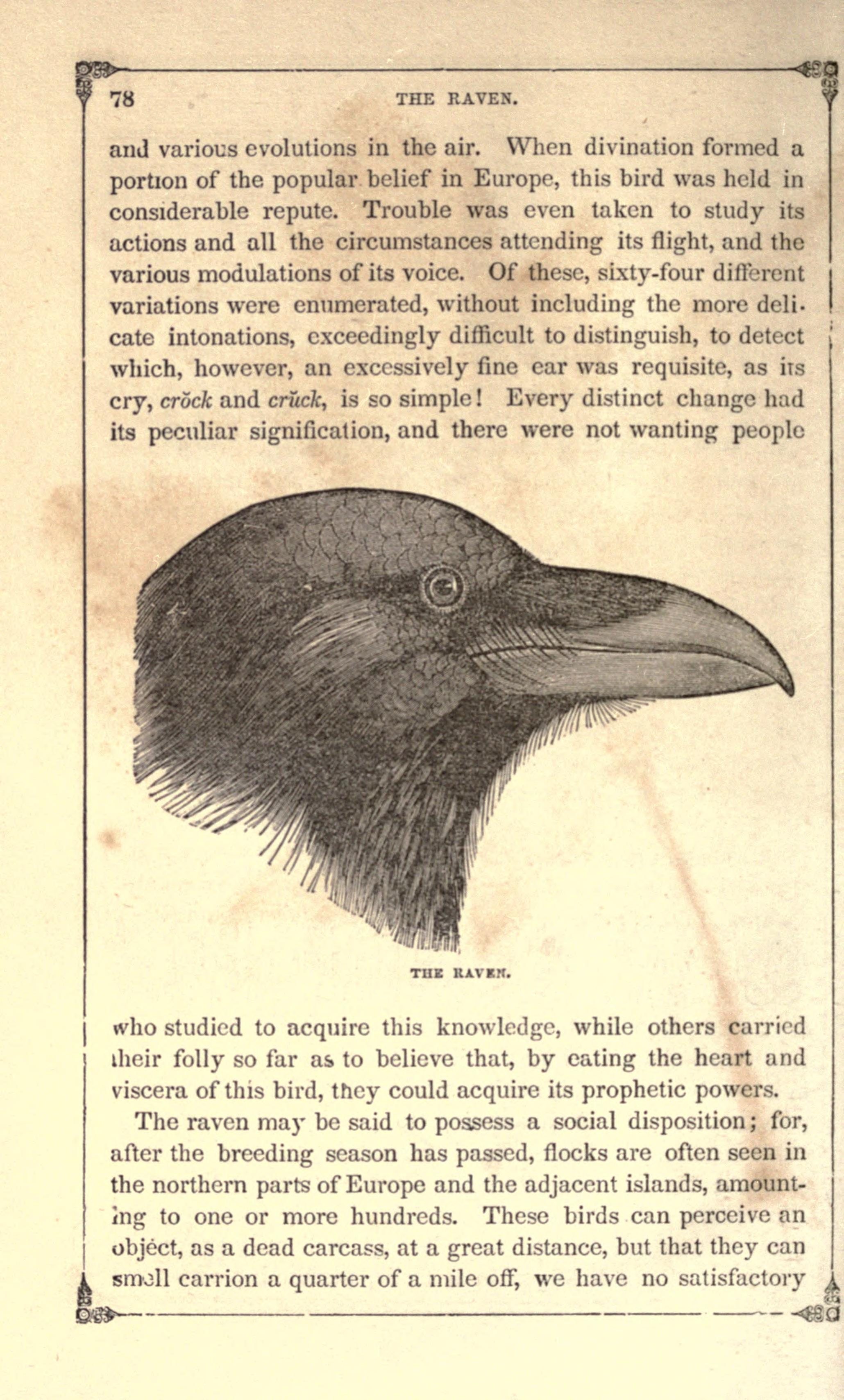 the american bird