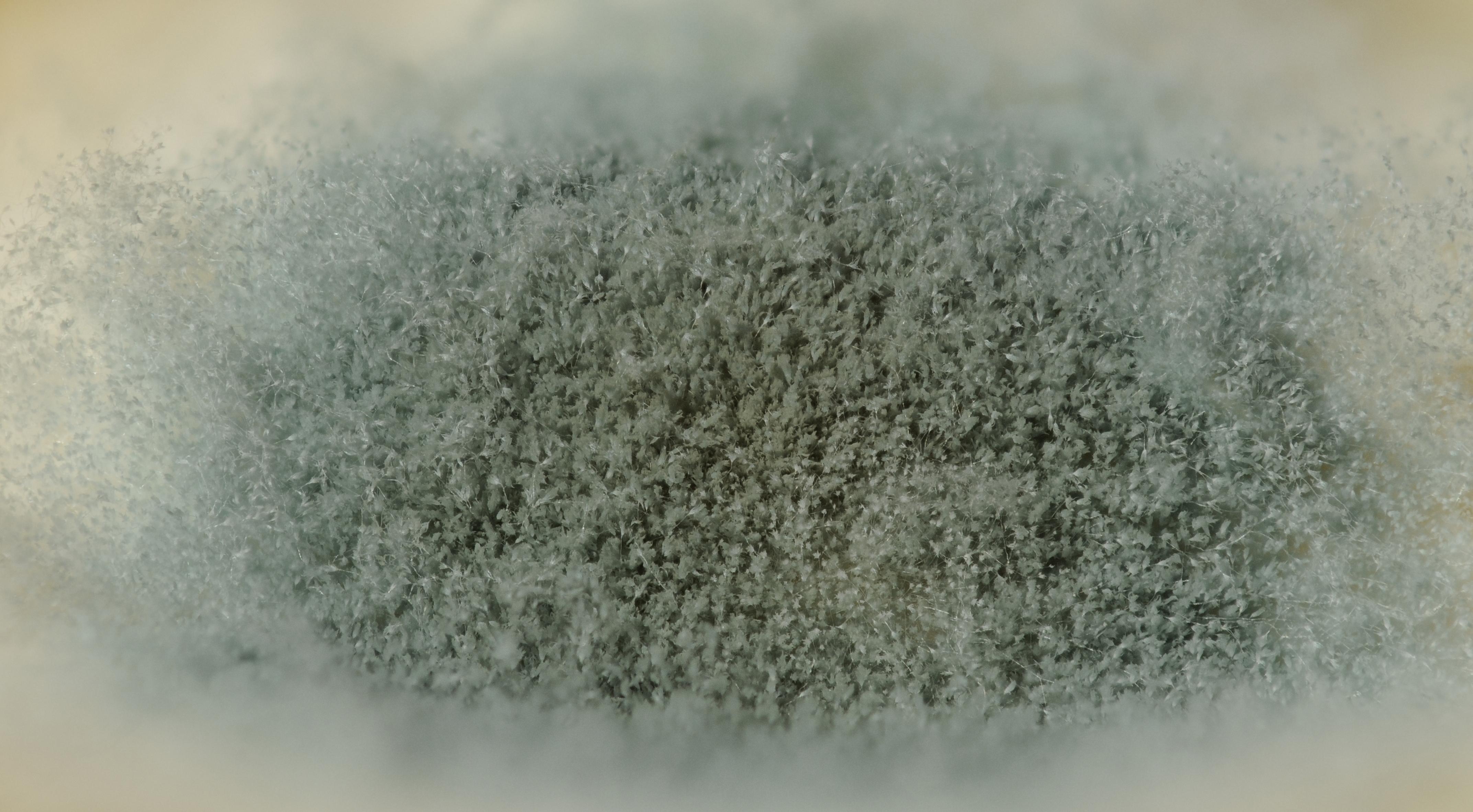 File:2013-01-02 17-41-09-mold-72f.jpg