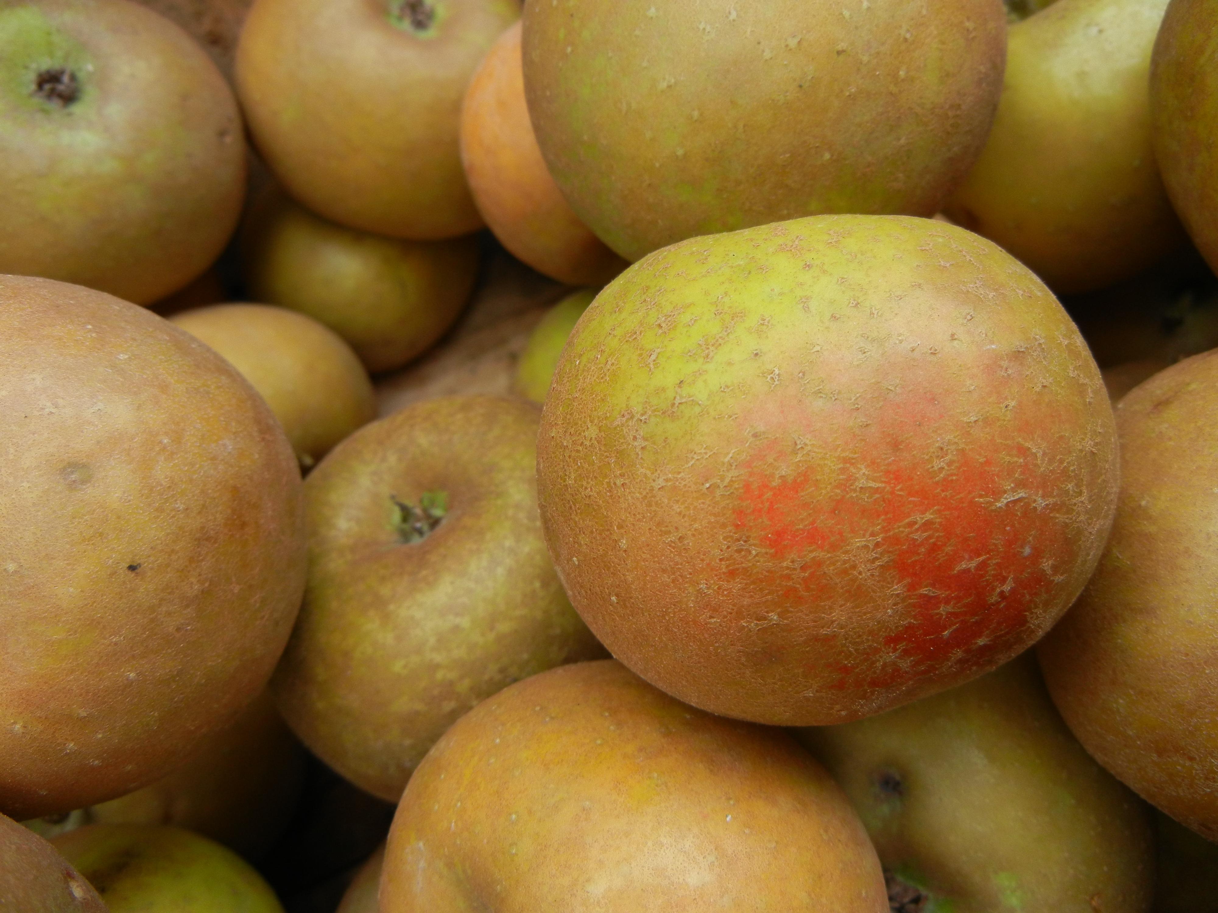 Ashmead's Kernel Apples.jpg