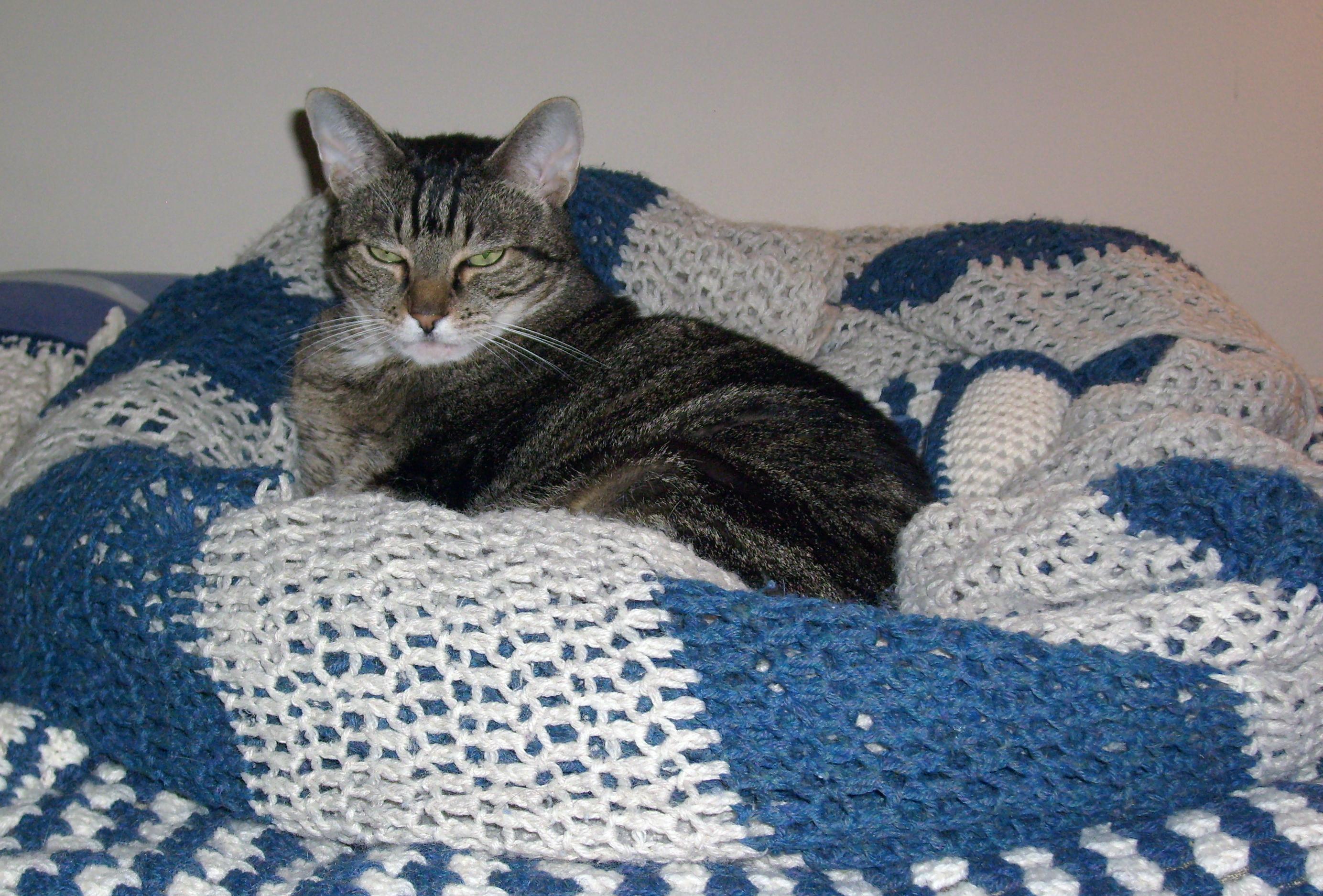 wenn s zur herbstzeit drau en nass und kalt wird bleiben katzen lieber drinnen katzen. Black Bedroom Furniture Sets. Home Design Ideas