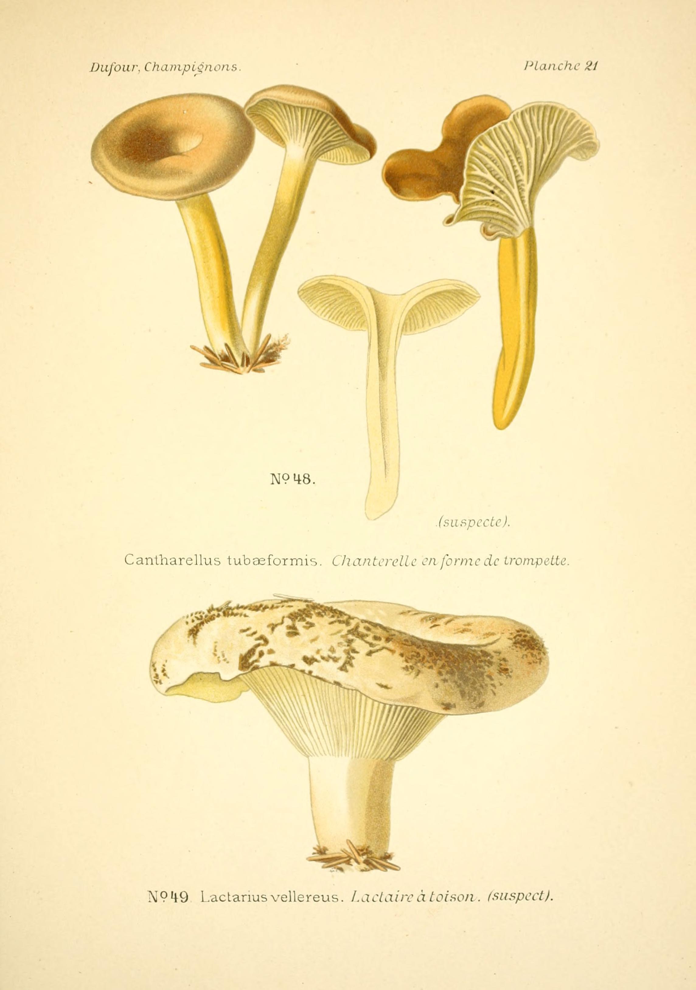 File:Atlas des champignons comestibles et vénéneux (Planche 21 ...
