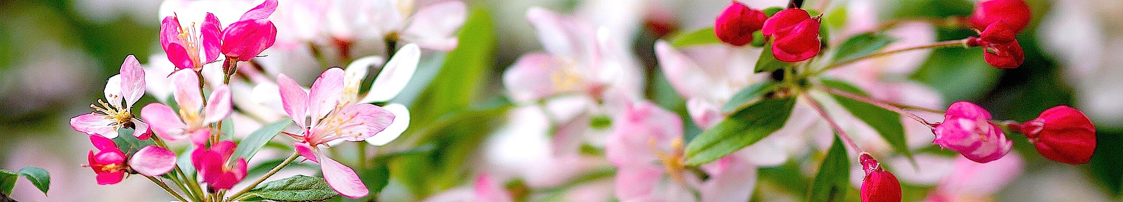 Цветы Божией Матери.