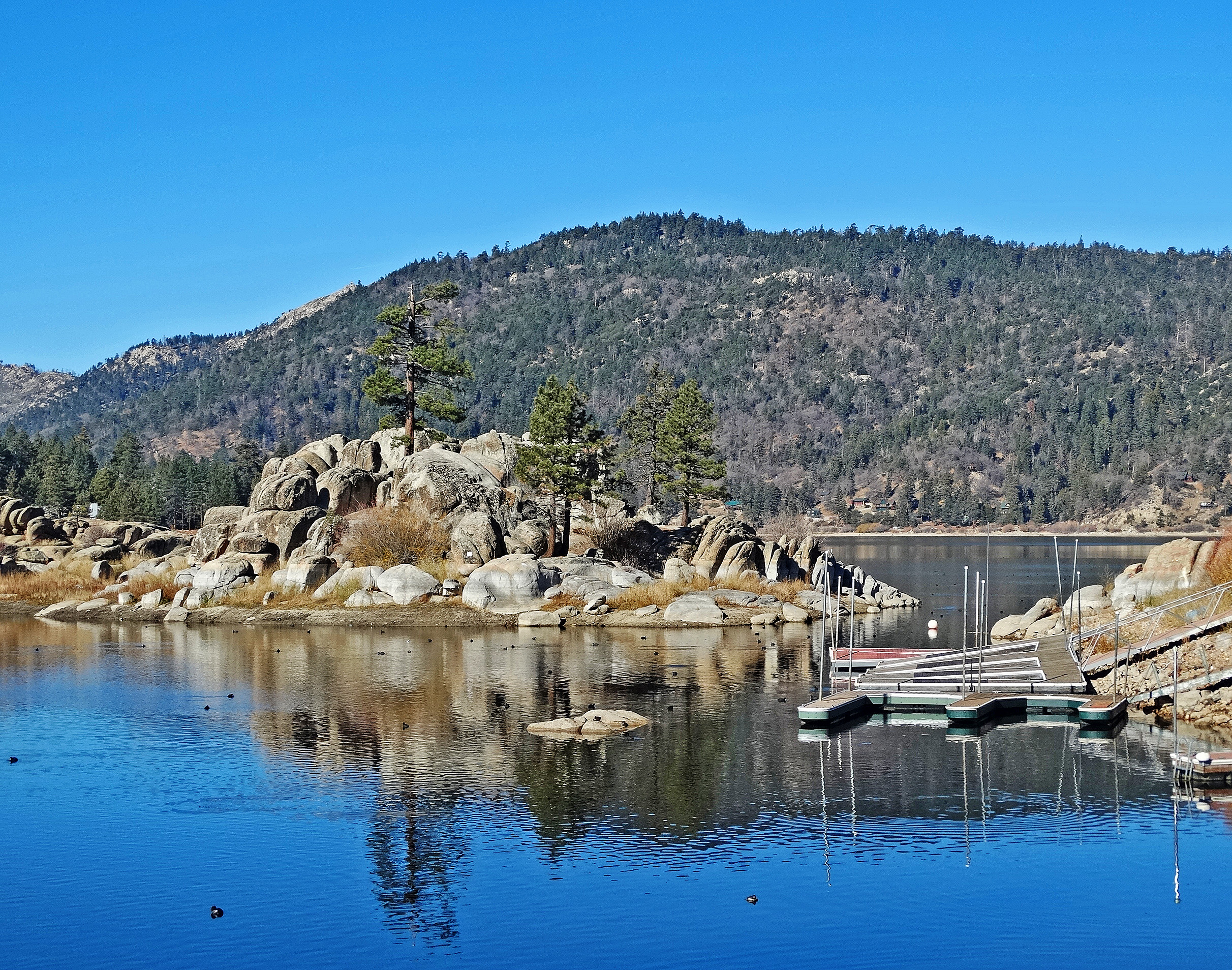 big bear lake cougars personals 46 miles round trip easy - moderate level with some view points of the lake big bear this was the first official hike of my life a good friend of mine is all into hiking and was looking forward to this hike when we decided on camping in big bear.