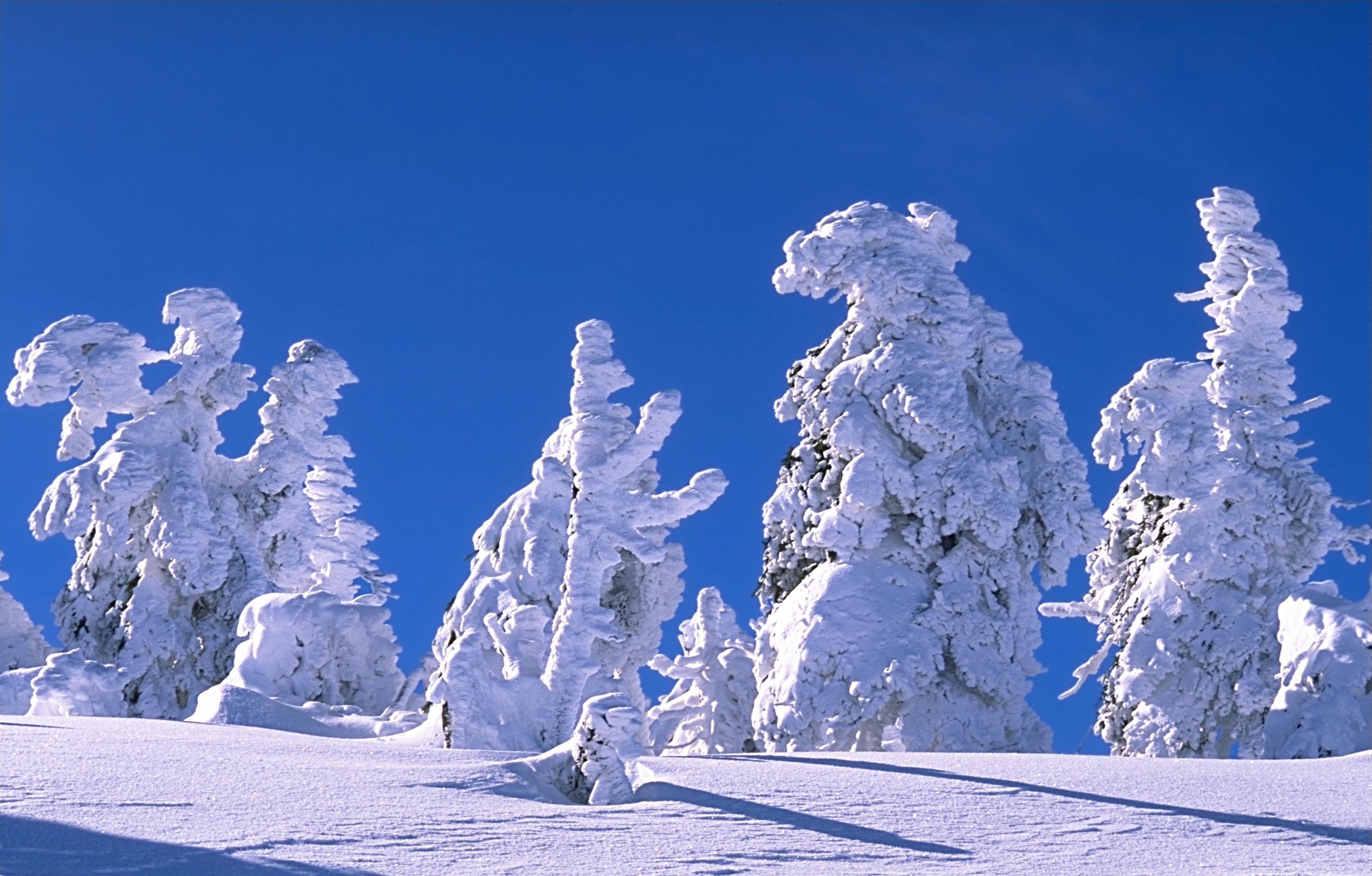 10 odes to beautiful snow now beautifulnow