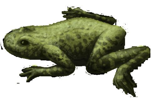 Callobatrachus