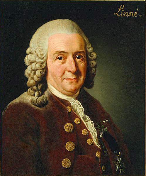 Portrait of Carolus Linnaeus