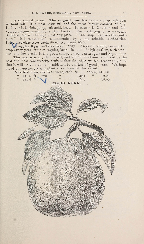 File Catalogue Of The Orange County Nurseries 1895 20395535120 Jpg