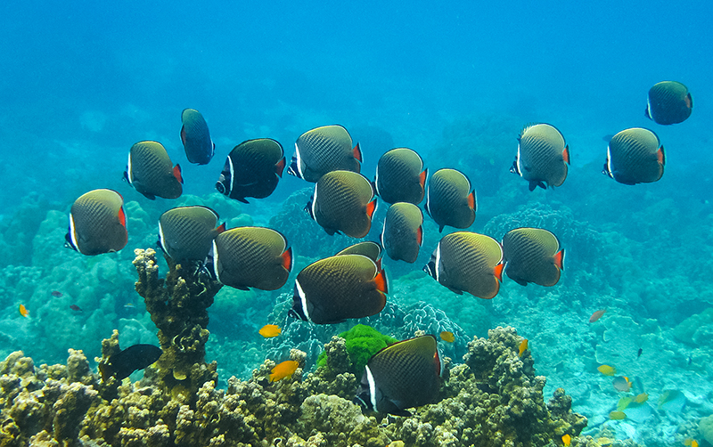 Snorkeling From Beach Tokoriki Island Fiji Day Trip