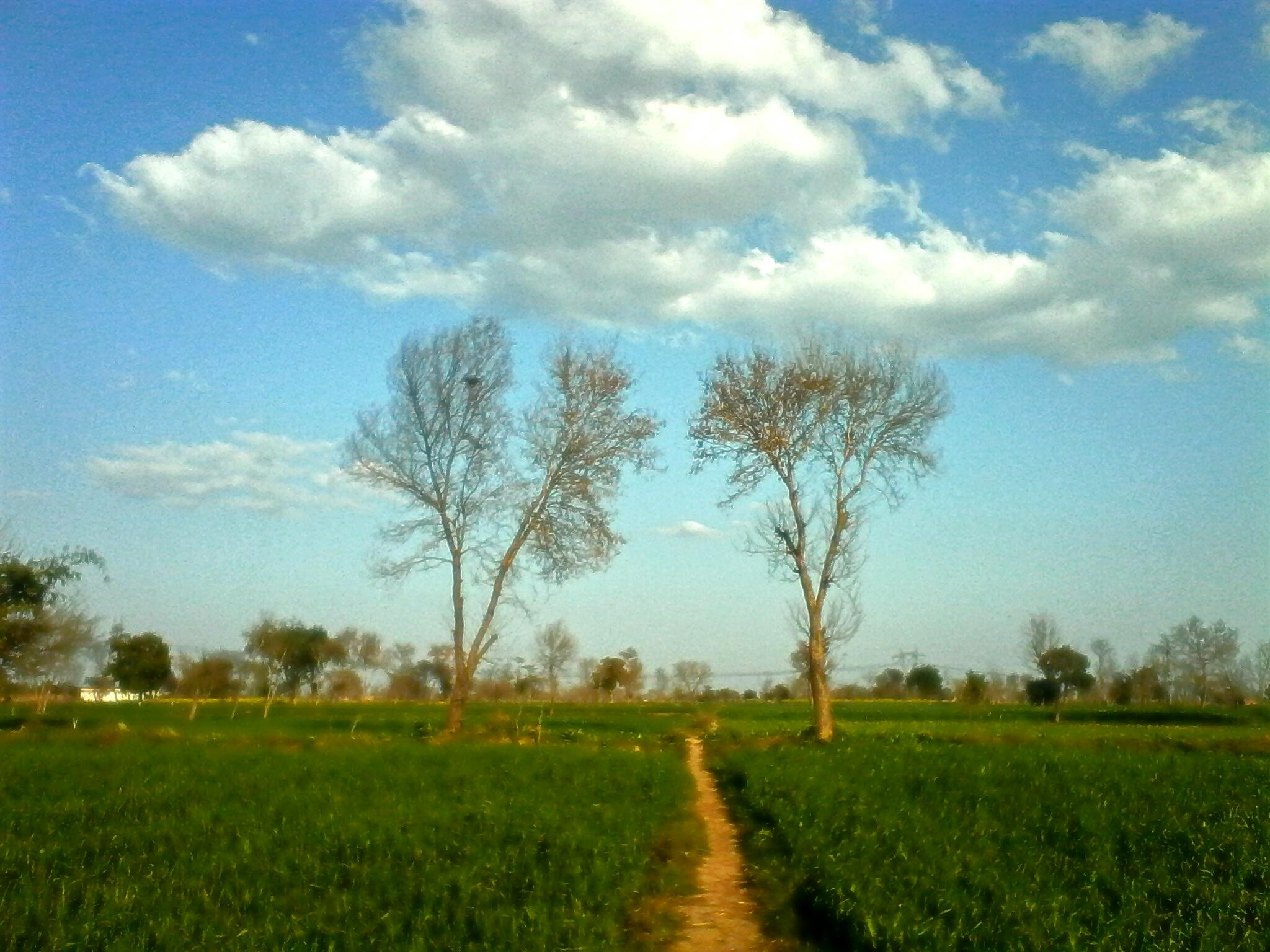 Filechak Basawa Village Punjab Pakistanjpg Wikimedia