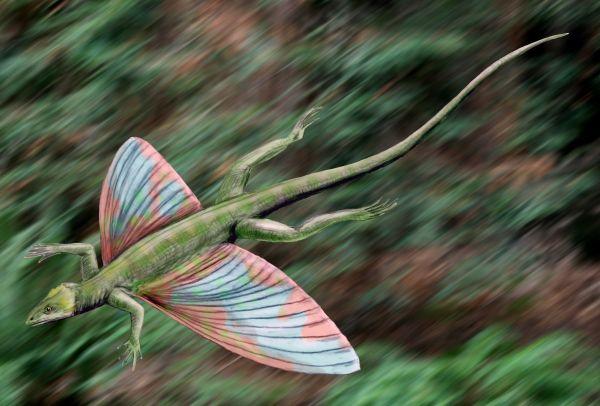 Lebendrekonstruktion von Coelurosauravus im Gleitflug