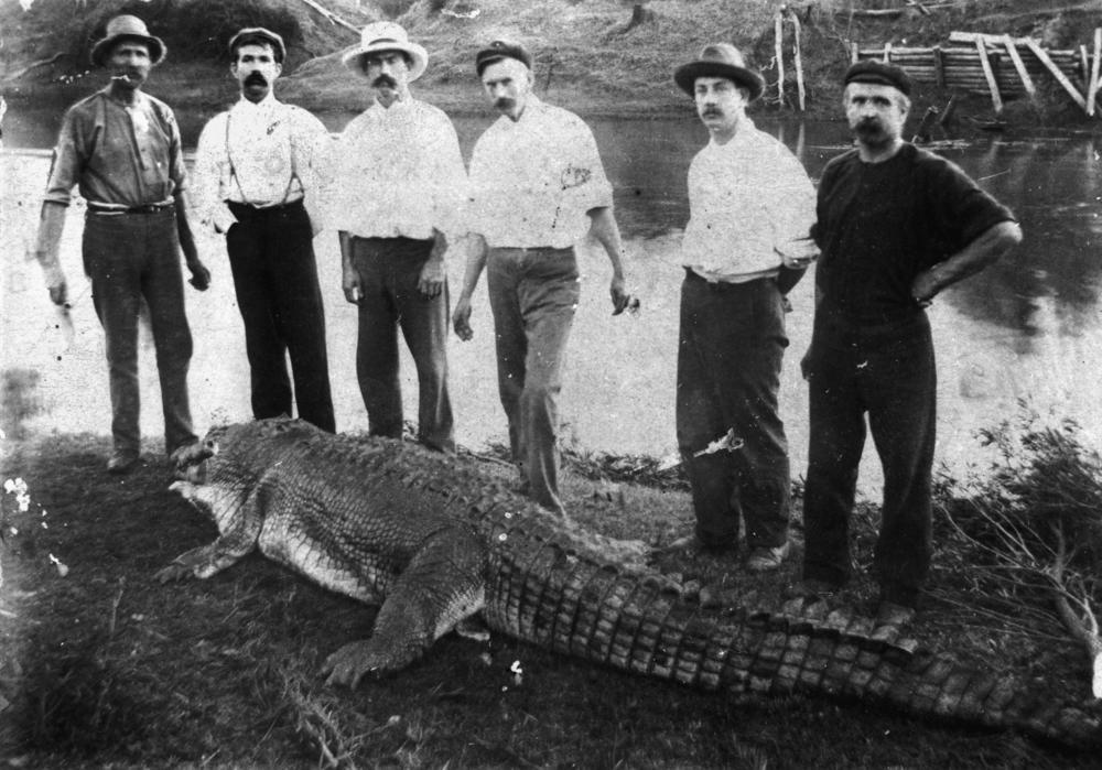 File:Crocodile shot in the Logan River near Logan Villagelogan village